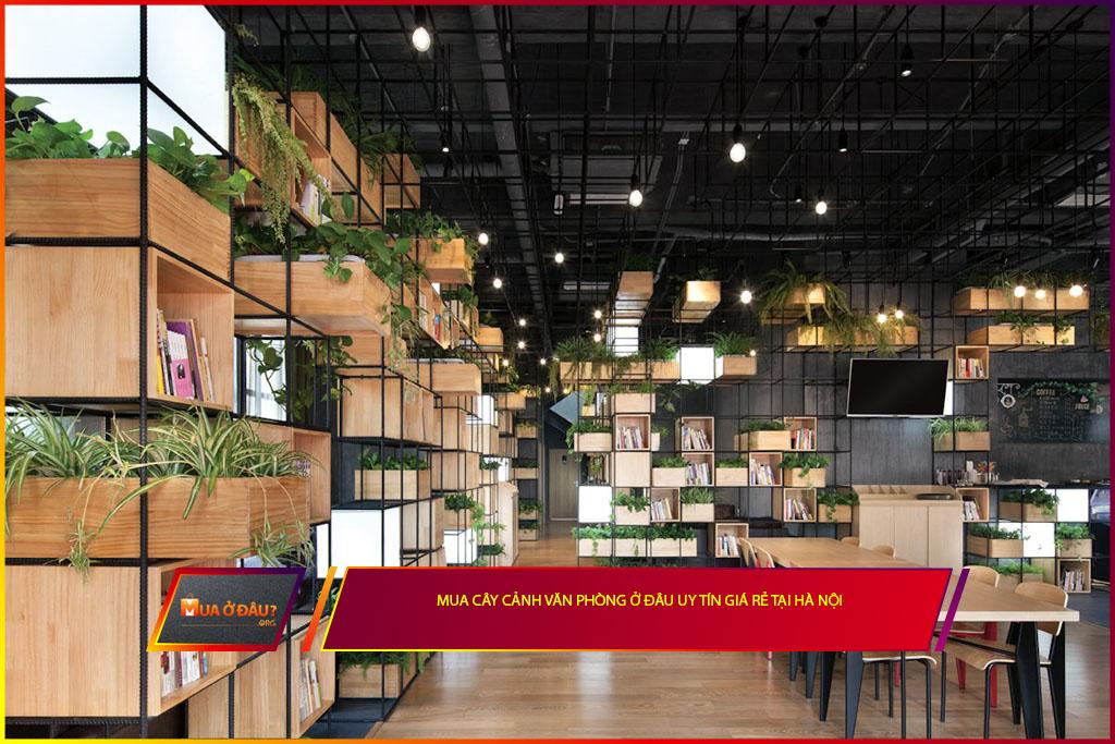 Mua cây cảnh văn phòng ở đâu uy tín giá rẻ tại Hà Nội?
