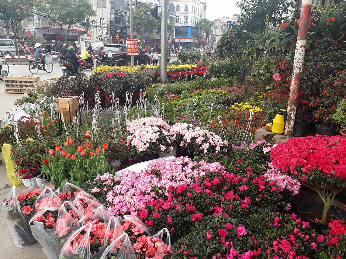 chợ cây cảnh hoàng hoa thám